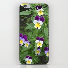 Violas iPhone Skin