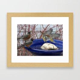 Robin and Cedar Waxwing dance Framed Art Print