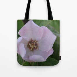 Quince tree flower Tote Bag