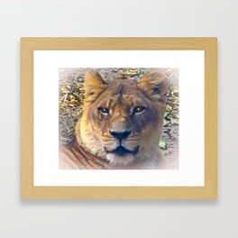 Felmale Lion Framed Art Print