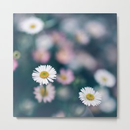 White Daisies With Pink Flower Accents Metal Print