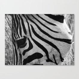 In the eye of the Zebra Canvas Print