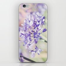 Agapanthus 1 iPhone & iPod Skin