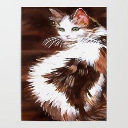 Elegant Long Haired Bi-Colored Cat Poster