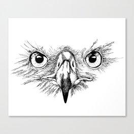 Eagle Eyes Canvas Print