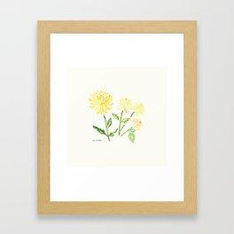 Yellow Chrysanthemums Framed Art Print