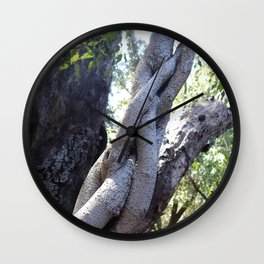 Twisted ficus forest Wall Clock