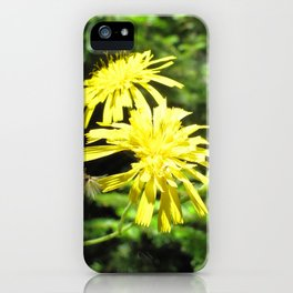 Watercolor Flower, Canada Hawkweed 02, Cape Breton, Nova Scotia, Canada, Beauty and the Beast iPhone Case