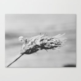 Black and White Macro Weed Canvas Print