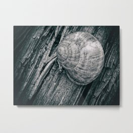 Time in a shell Metal Print