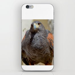 Harris Hawk iPhone Skin