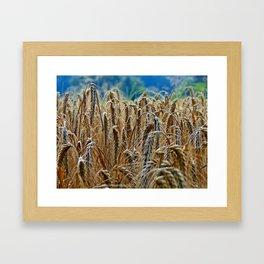 cornfield Framed Art Print