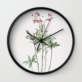 Vintage Lily of the Incas Illustration Wall Clock