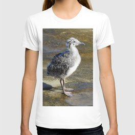 Ring-billed Gull Chick T-shirt
