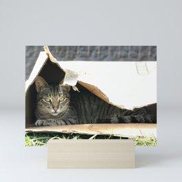 Box Kitty (Lanai Cat Sanctuary) Mini Art Print