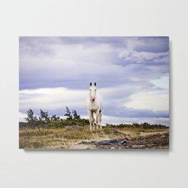 White horse, Torres Del Paine Metal Print
