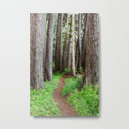 Lost Coast Trail Forest Metal Print