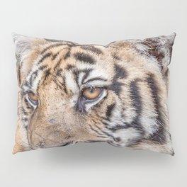 Tiger, Medium Indo-China Pillow Sham