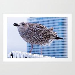 BAY WATCH - Seagull of Baltic Sea Art Print