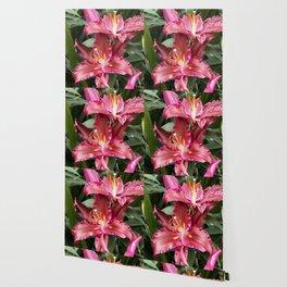 Longwood Gardens Orchid Extravaganza 42 Wallpaper