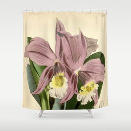 Sophronitis jongheana Shower Curtain