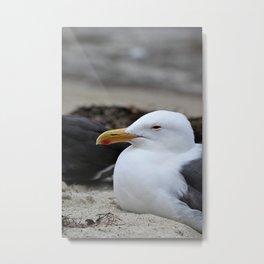 Sleepy Gull Metal Print
