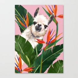 Llama in Bird of Paradise Flowers Canvas Print