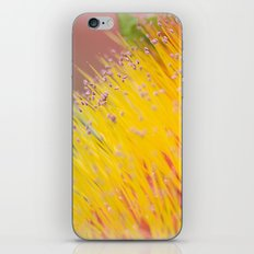 Through a Field of Yellow iPhone & iPod Skin