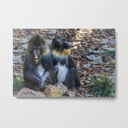 Monkeys - Mandrill Metal Print