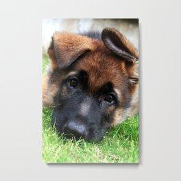 Playful Puppy. Metal Print