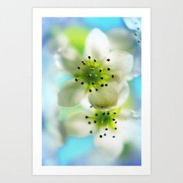 Blossom aqua Art Print