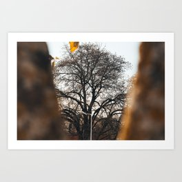 Tree through a tree Art Print
