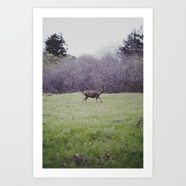 big sur deer Art Print