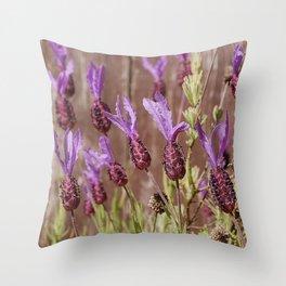 French Lavender (Lavandula stoechas) Throw Pillow