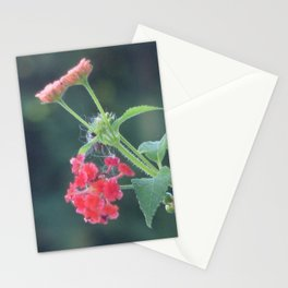 Red on the wall Stationery Cards