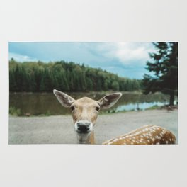 Fawn in nature looking in camera Rug