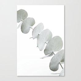EUCALYPTUS WHITE 3 Canvas Print