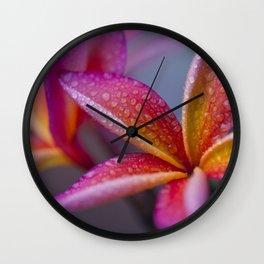 Windows into Nature Wall Clock