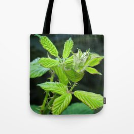 Blackberry Leaves Tote Bag