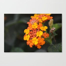 Orange and Yellow Canvas Print