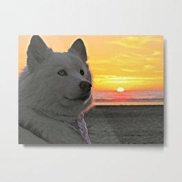 Sunset Sammy Metal Print