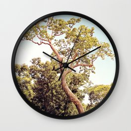 Tree Growing on Temple Wall Clock