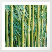 bamboo Art Prints featuring Bamboo by Laura Ruth