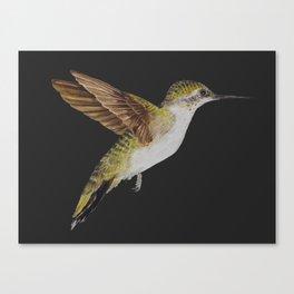 Hummingbird Watercolour Canvas Print