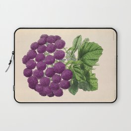 Double Cineraria Original hand-coloured print drawn and lithographed by Fitch Laptop Sleeve