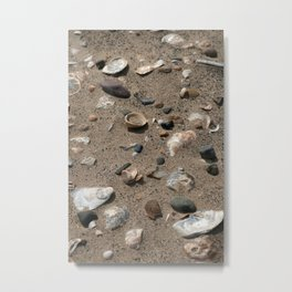 The Beach Covered with Shells Photograph Metal Print