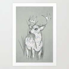 White-Tailed  Art Print