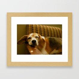Sleepy Beagle Framed Art Print