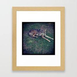 Coyote Calm Framed Art Print