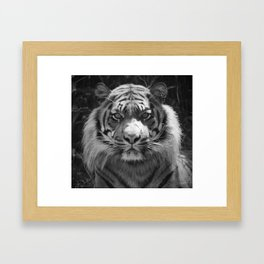 The eye of the tiger Framed Art Print